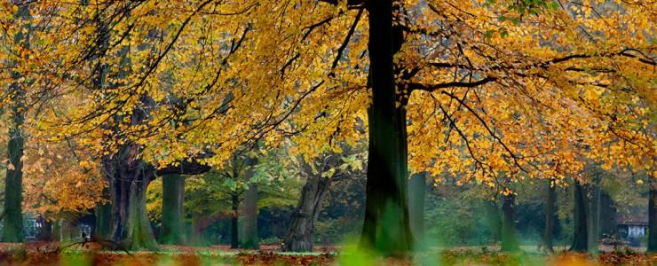 Vacature bij Vereniging Vrienden van de Haarlemmerhout